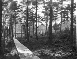 Photograph of the woods around Shirreff Hall