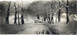 Photograph of a snowy road on Studley campus