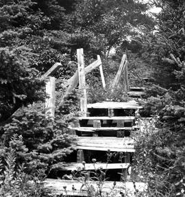 Photograph of an old wooden staircase on McNab's Island