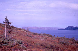 Photograph of a hill with vegetation in Nain, Newfoundland and Labrador