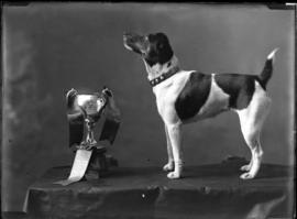 Photograph of a Smooth Fox Terrier bred and owned by George Stonewall Jackson