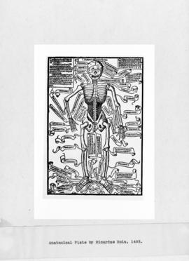 Photograph of Anatomical Plate by Ricardus Hela