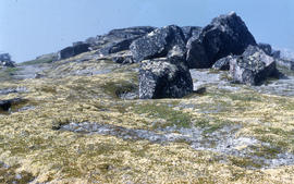 Photograph of vegetation and rock formations on the tundra in George River, Quebec