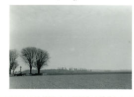 Photograph of the maples around the Manitoba Cemetery on the Amiens battlefield with Hatchet Wood...