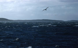 Photograph of a seagull flying over Pretzlan Harbour