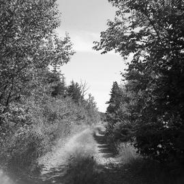 Photograph of a dirt road