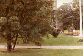 Photograph of a lawn and trees on Studley campus