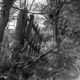 Photograph of a broken gate on McNab's Island