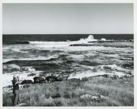 Photograph of Thomas Head Raddall looking out over the entrance of Moose Harbour with binoculars