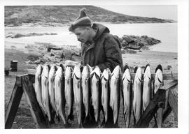 Photograph of an unidentified man with a rack of gutted fish