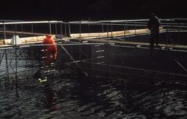 Slide showing fish farming
