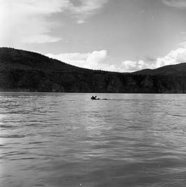 Photograph of a moose swimming in the Yukon River
