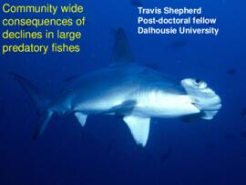 Community wide consequences of declines in large predatory fishes : [PowerPoint presentation]