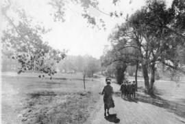 Photograph of people walking on Studley Campus, Dalhousie University