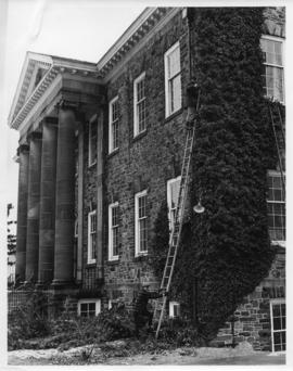 Photograph of men removing ivy from the front of the Dalhousie Law School