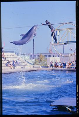 Photo negative of dolphin jumping at aquarium in Batumi, Georgia