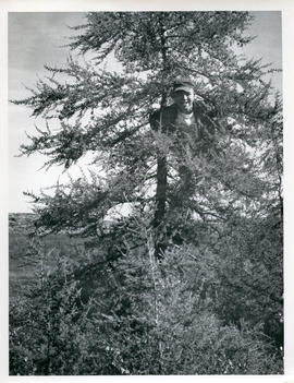 Photograph of Noah climbing a tree in Fort Chimo, Quebec