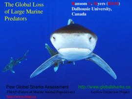 The global loss of large marine predators : [PowerPoint presentation]