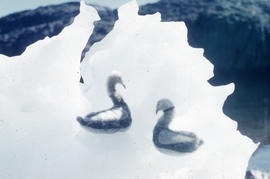 Photograph of two goose figurines made of fur