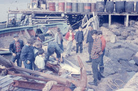Photograph of a crowd of people around a gutted porpoise in Battle Harbour, Newfoundland and Labr...