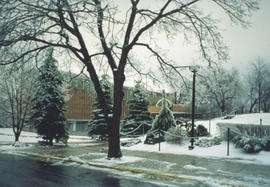 Photograph of trees next to the F. H. Sexton Memorial Gymnasium
