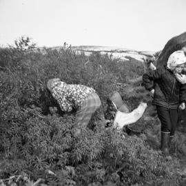 Photograph of three children picking berries in Fort Chimo, Quebec