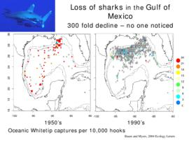 Loss of sharks in the Gulf of Mexico: 300 fold decline -  not one noticed : [PowerPoint presentat...