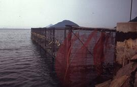 Slide showing a fish farm