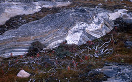 Photograph of rocks and vegetation in Fort Chimo, Quebec
