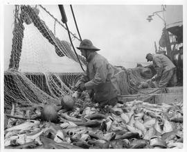 Photograph of Nova Scotian fishermen at sea