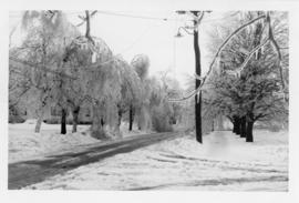 Photograph of North Summer street after an ice storm in Summerside Prince Edward Island
