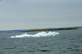 Photograph of seagulls on an ice floe in Frobisher Bay