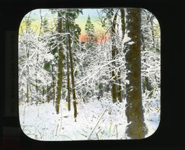 Photograph of snow covered trees