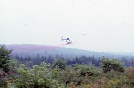 Photograph of a helicopter spraying Glyphosate at Brier Island, Nova Scotia