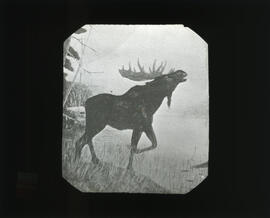 Photograph of an illustration of a moose