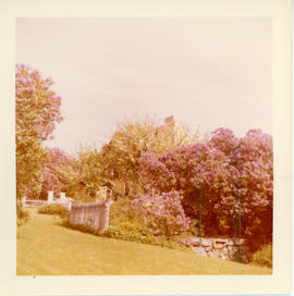 Photograph of the flowering Chinese crab apple trees and gates in front of the Governor Wentworth...