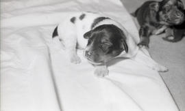 Photograph of puppies at Howe Hall