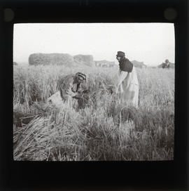 Photograph of people in a field