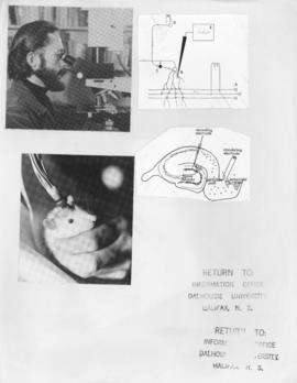 Psychology - electrical stimulation procedure on rat, with diagrams